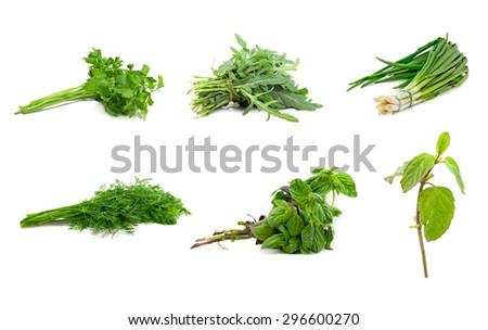 green herbs for the kitchen on a white background - stock photo