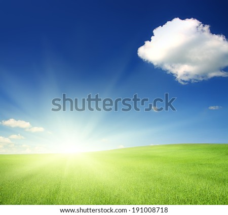 green hill with wheat under blue sky in sunshine