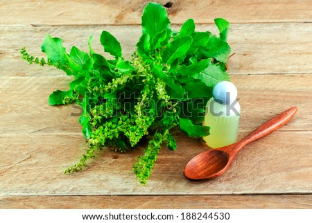Green holy basil and spoon on on wooden background - Thai herbs and spices - stock photo