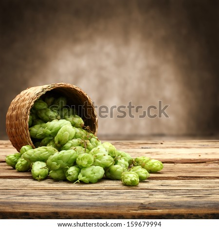 green hop  - stock photo
