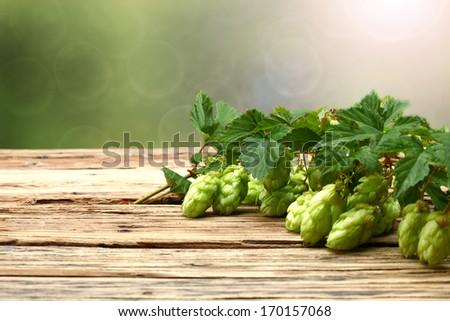 green hop leaves  - stock photo