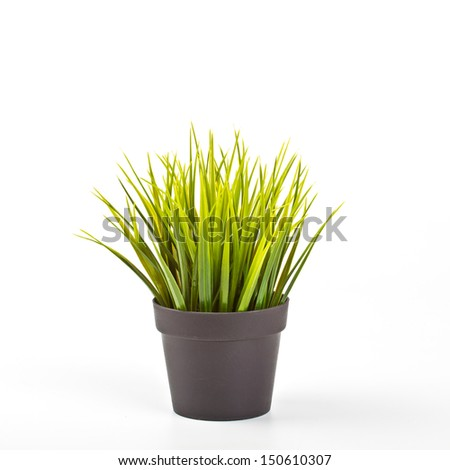 Green House Plant In A Pot. High quality stock photo.