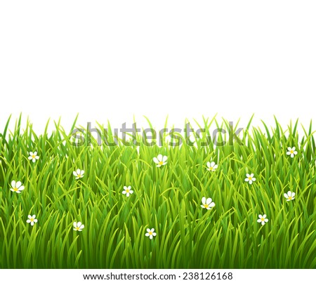 Green isolated grass with flowers on white background - stock photo