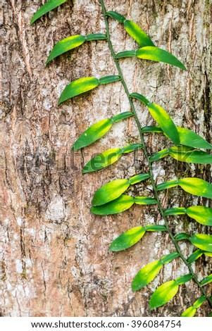 Green ivy crawling on the old tree trunk - stock photo