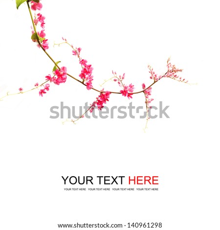 Green ivy with pink blossoms on a white background - stock photo
