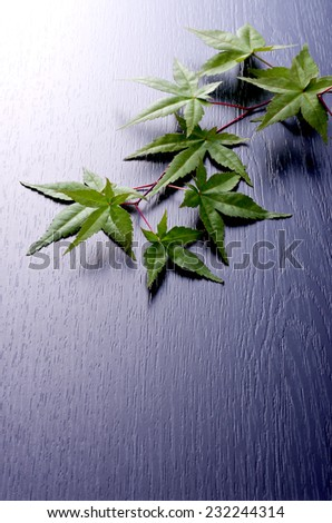 green japanese maple - stock photo