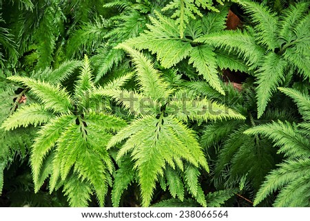 Green jungle plant. Natural background. - stock photo