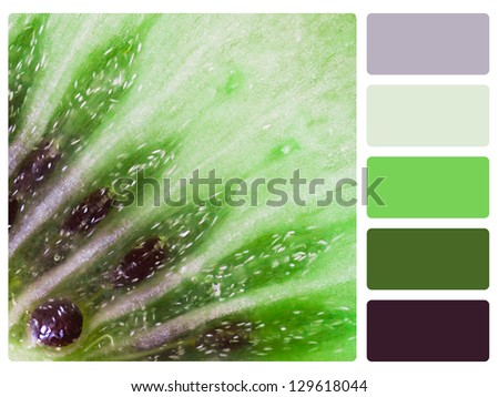 Green kiwi color palette with complimentary swatches. - stock photo
