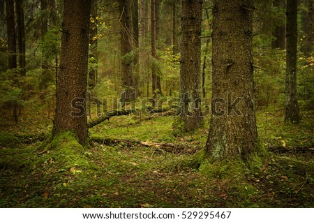 green landscape of coniferous forest