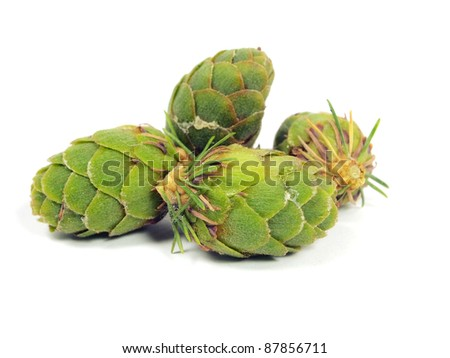 green larch cones on a white background - stock photo