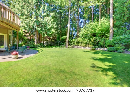 Green large back yard with pine trees. - stock photo