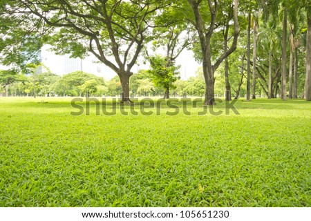 Green lawn in city park - stock photo