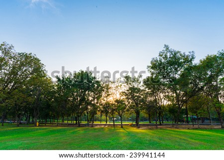 Green lawn in city park under sunny light, Evening day time - stock photo