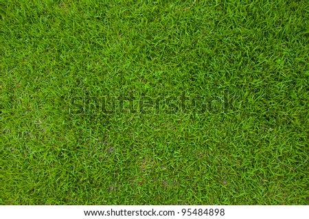 Green lawn in Tu - stock photo