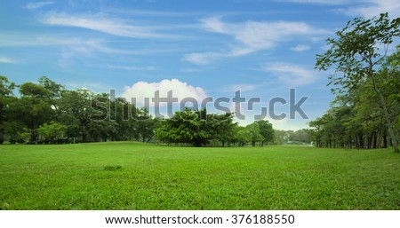 Green Lawn of a Spacious City Park - stock photo