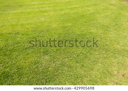 Green lawn pattern, Green grass natural background. - stock photo