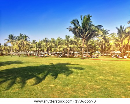 green lawn with palm trees. Goa