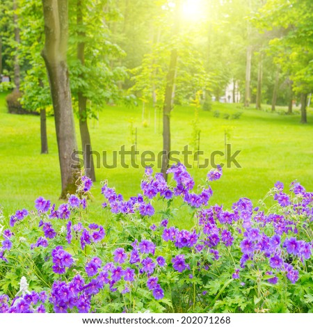 Green lawn with trees and flowers in the park, sunny light - stock photo