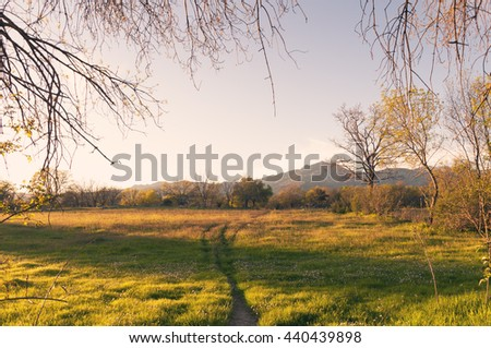 Green lawn with trees in forest under sunny light