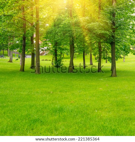 Green lawn with trees in park under sunny beams light. Environment landscape - stock photo