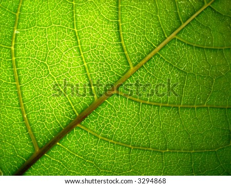 green leaf 2 - stock photo