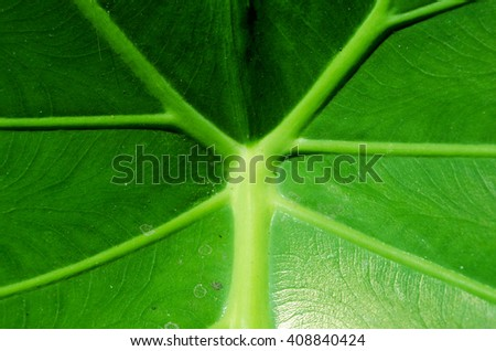 Green leaf. - stock photo