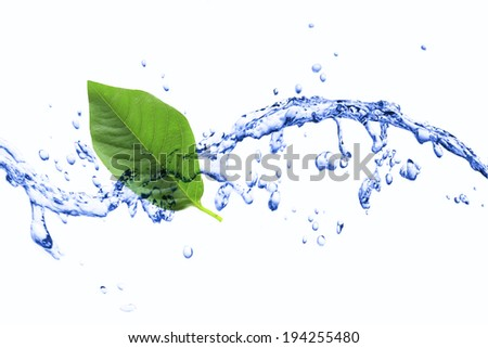 green leaf abstract. - stock photo