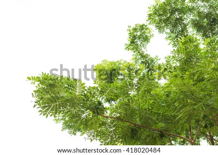 Green leaf and branch isolated on white background