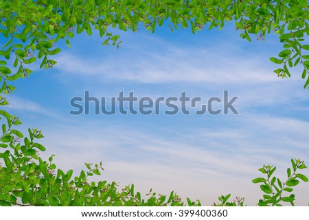green leaf and in blue sky with copy space - stock photo