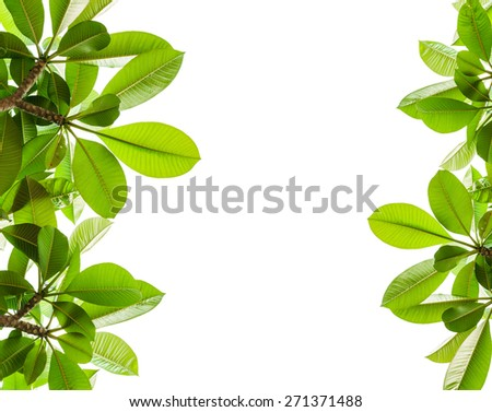 green leaf and isolated background - stock photo