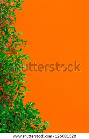 Green leaf and orange color wall background - stock photo