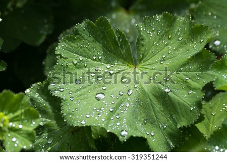 Green leaf and rain drops for background - stock photo