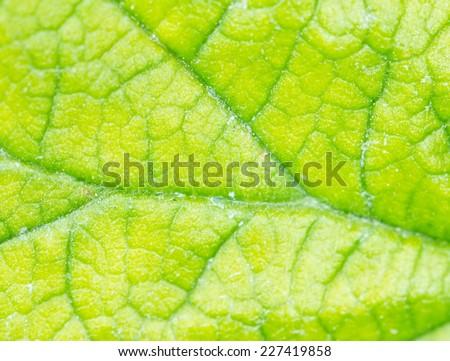 green leaf as background. macro - stock photo