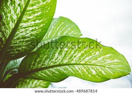 green leaf background, close-up of fresh green leaf as background.