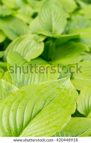 Green leaf background copy space. - stock photo