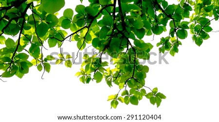 green leaf background with branch on white background - stock photo