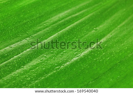 Green leaf close-up background - stock photo