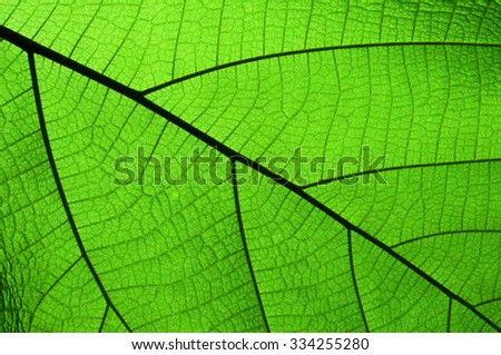 Green leaf closed up details background - stock photo
