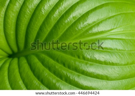 green leaf closeup - stock photo