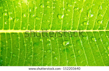 Green leaf details from a Leelavadee - stock photo