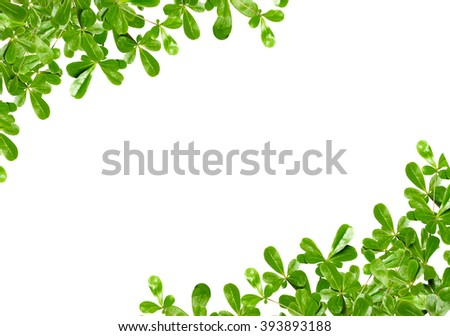 green leaf for background with copy space - stock photo