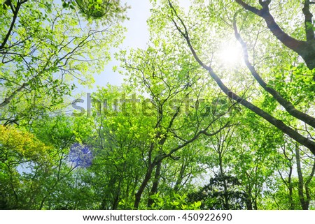 green leaf forest - stock photo