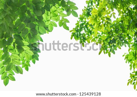 green leaf frame  and white  background