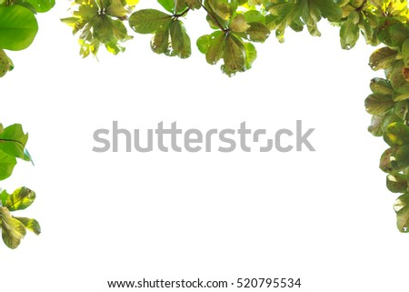 Green leaf frame isolate on white background.