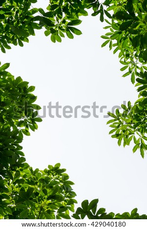 Green leaf frame with white isolated copy space