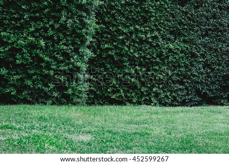 Green leaf, grass with tree fence. Image is vintage effect and low light photo