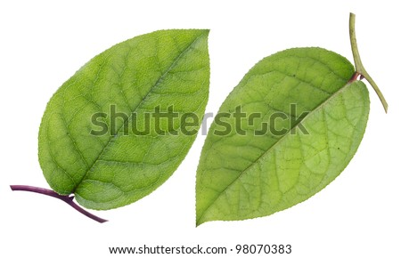 Green leaf, health top and patient bottom view collage isolated
