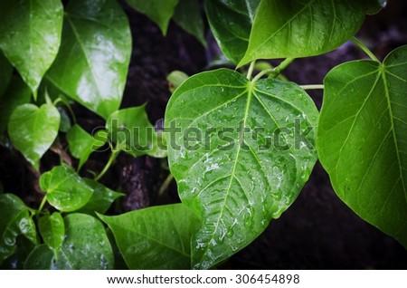 Green leaf herbs - stock photo