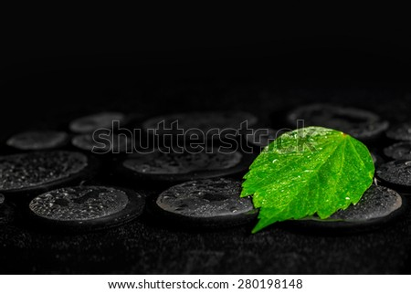 green leaf hibiscus on zen basalt stones with drops in water, beautiful spa background, closeup  - stock photo