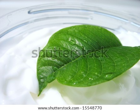 green leaf in lotion - stock photo